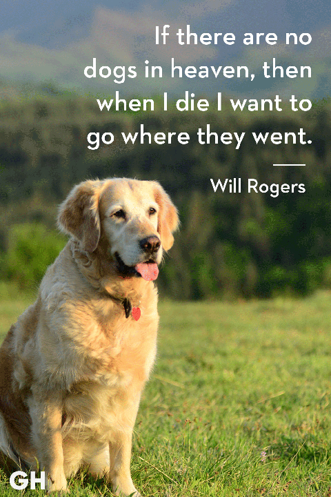 ghk-dog-quotes-will-rogers-1543942198.png