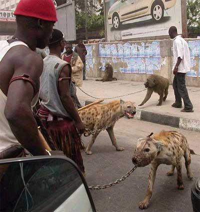 pet-hyena.jpg