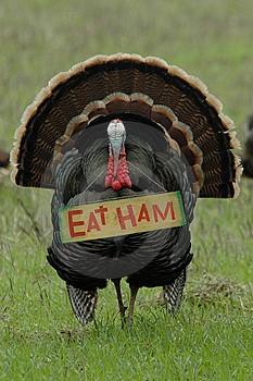 turkey_eat_ham.jpg